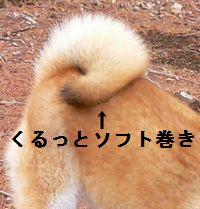 shibako10.jpg