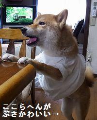 shibako6.jpg