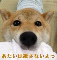 shibako7.jpg