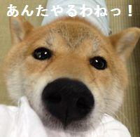 shibako8.jpg