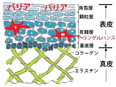 moshikizu2.1
