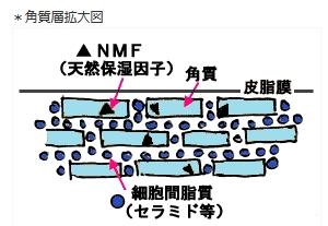 moshikizu5