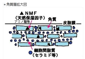 moshikizu52